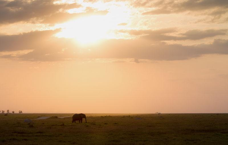 Африка. Кения.