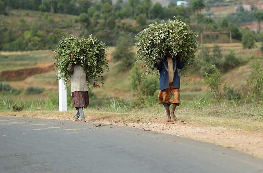 Мадагаскарский стрит.