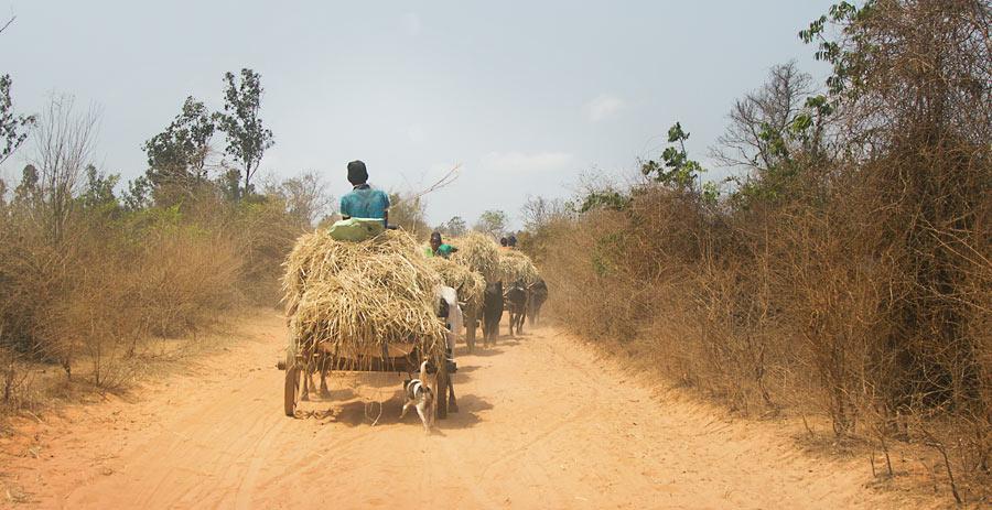 Мадагаскар, Цинги