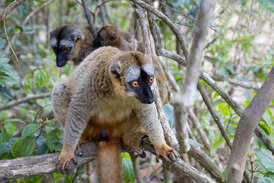 Мадагаскар и баобабы