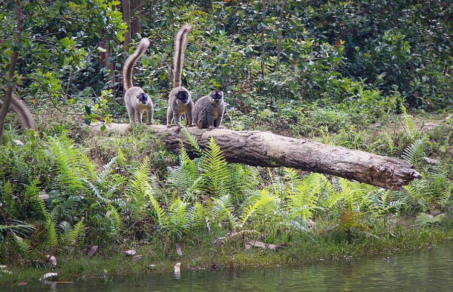 Мадагаскар и зверьё